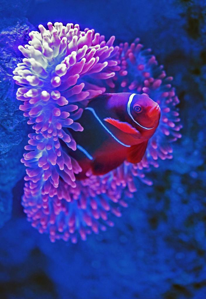Underwater travel adventures